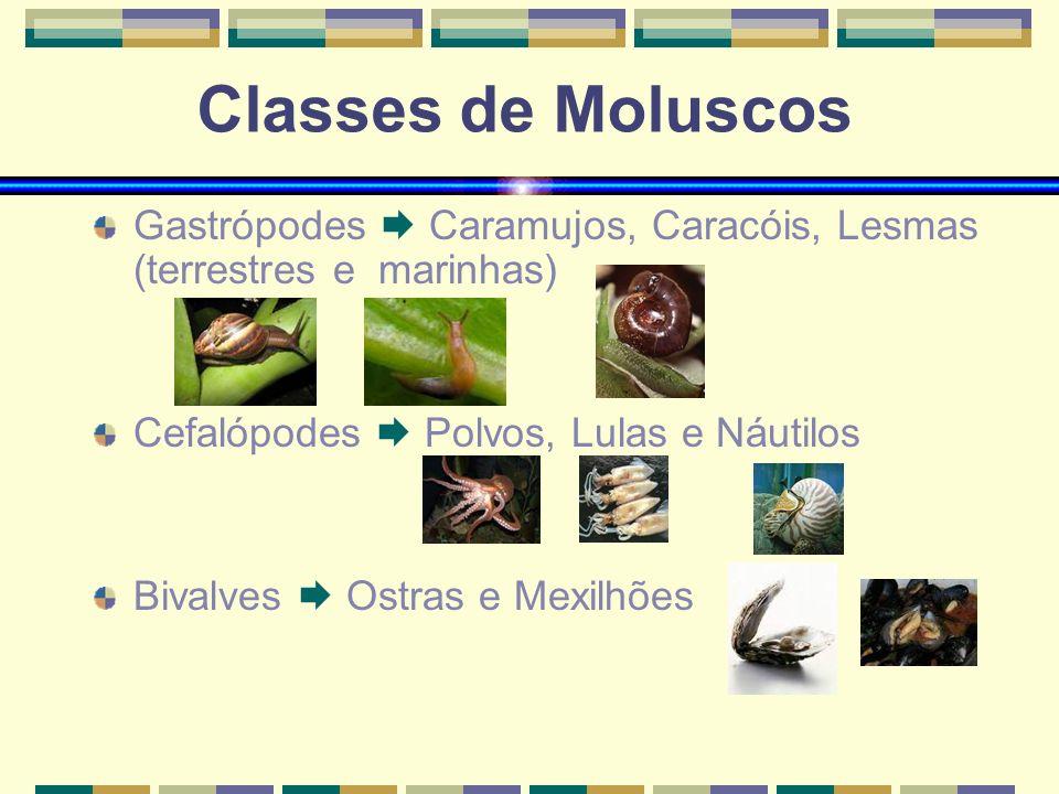 Classes de Moluscos Gastrópodes Caramujos, Caracóis, Lesmas (terrestres e marinhas) Cefalópodes Polvos, Lulas e Náutilos Bivalves Ostras e Mexilhões