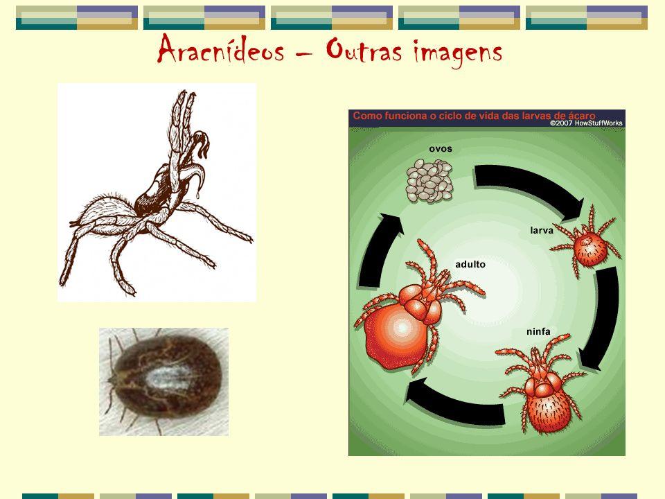 Aracnídeos – Outras imagens