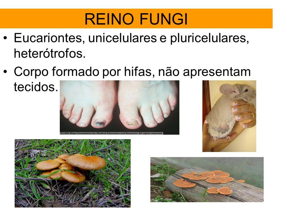 REINO FUNGI Eucariontes, unicelulares e pluricelulares, heterótrofos. Corpo formado por hifas, não apresentam tecidos.