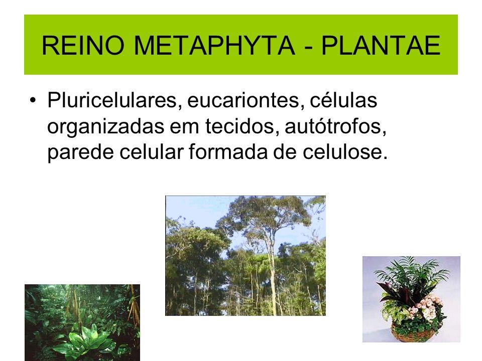 REINO METAPHYTA - PLANTAE Pluricelulares, eucariontes, células organizadas em tecidos, autótrofos, parede celular formada de celulose.