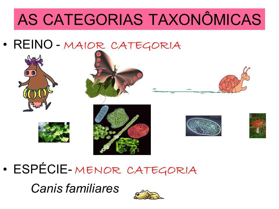 AS CATEGORIAS TAXONÔMICAS REINO - MAIOR CATEGORIA ESPÉCIE- MENOR CATEGORIA Canis familiares