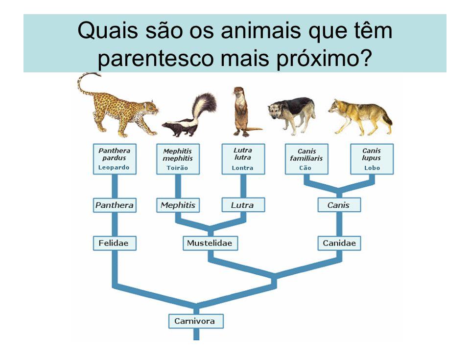 Quais são os animais que têm parentesco mais próximo?