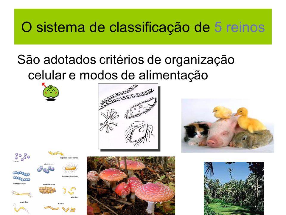 O sistema de classificação de 5 reinos São adotados critérios de organização celular e modos de alimentação