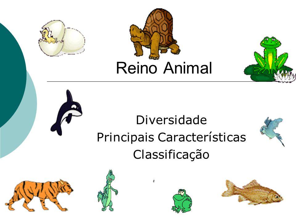 Reino Animal Diversidade Principais Características Classificação