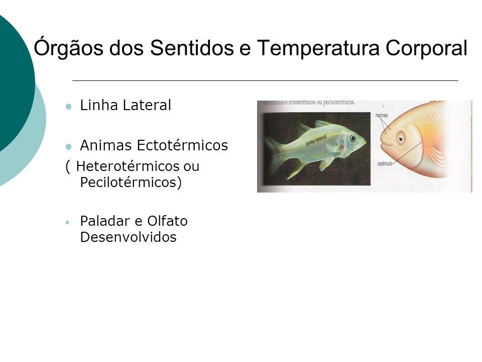 Órgãos dos Sentidos e Temperatura Corporal Linha Lateral Animas Ectotérmicos ( Heterotérmicos ou Pecilotérmicos) Paladar e Olfato Desenvolvidos
