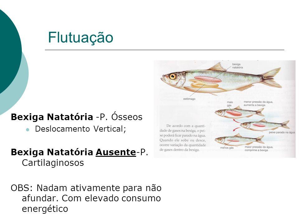 Flutuação Bexiga Natatória -P. Ósseos Deslocamento Vertical; Bexiga Natatória Ausente-P. Cartilaginosos OBS: Nadam ativamente para não afundar. Com el