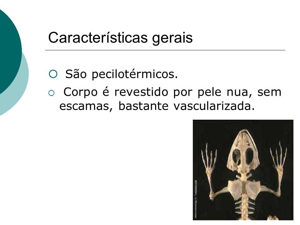 Características gerais São pecilotérmicos. Corpo é revestido por pele nua, sem escamas, bastante vascularizada.