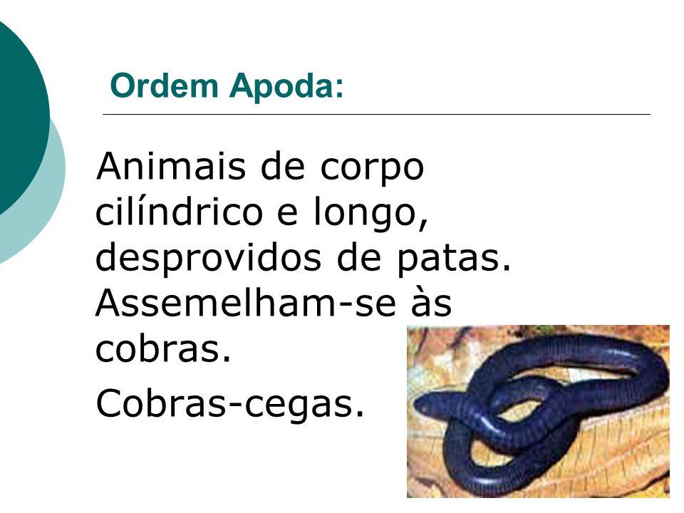 Ordem Apoda: Animais de corpo cilíndrico e longo, desprovidos de patas. Assemelham-se às cobras. Cobras-cegas.