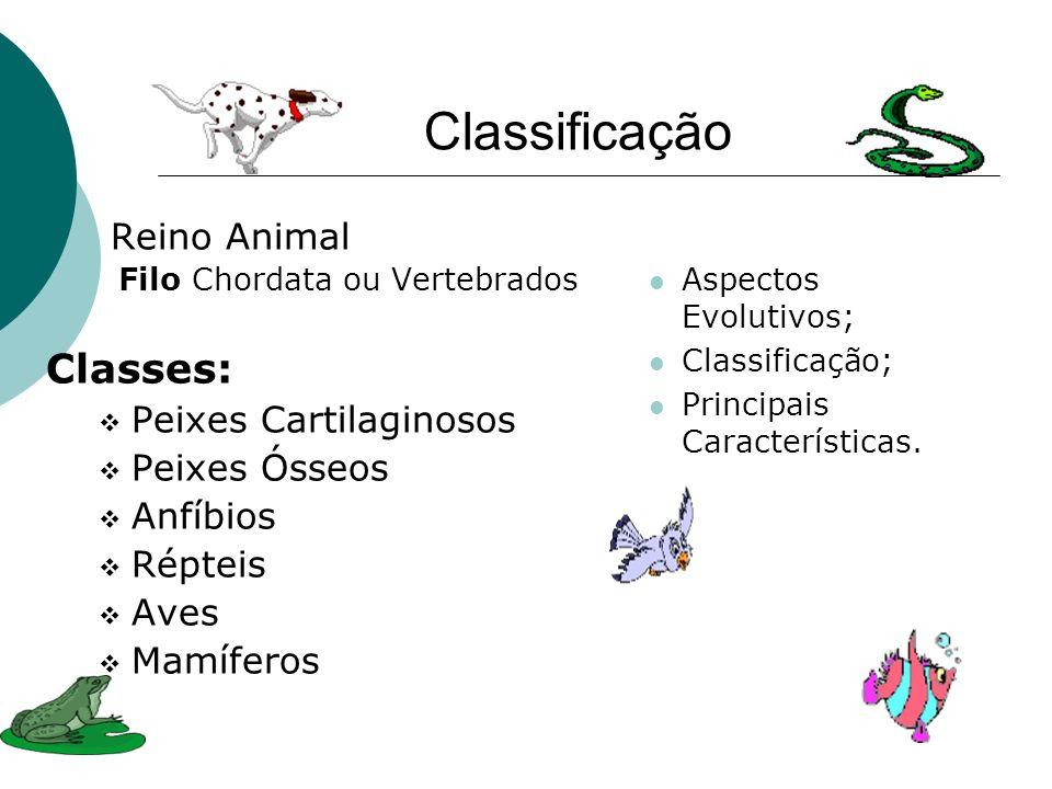 Classificação Reino Animal Filo Chordata ou Vertebrados Classes: Peixes Cartilaginosos Peixes Ósseos Anfíbios Répteis Aves Mamíferos Aspectos Evolutiv