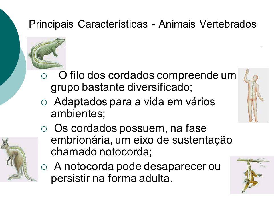 Principais Características - Animais Vertebrados O filo dos cordados compreende um grupo bastante diversificado; Adaptados para a vida em vários ambie