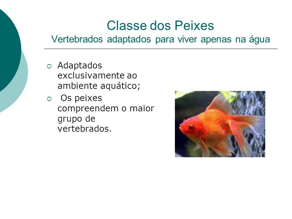 Classe dos Peixes Vertebrados adaptados para viver apenas na água Adaptados exclusivamente ao ambiente aquático; Os peixes compreendem o maior grupo d