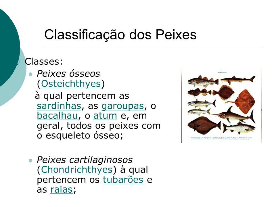 Classificação dos Peixes Classes: Peixes ósseos (Osteichthyes)Osteichthyes à qual pertencem as sardinhas, as garoupas, o bacalhau, o atum e, em geral,