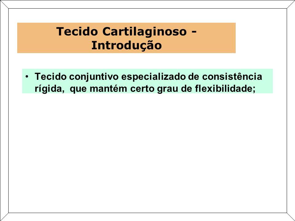 Tecido conjuntivo especializado de consistência rígida, que mantém certo grau de flexibilidade; Tecido Cartilaginoso - Introdução