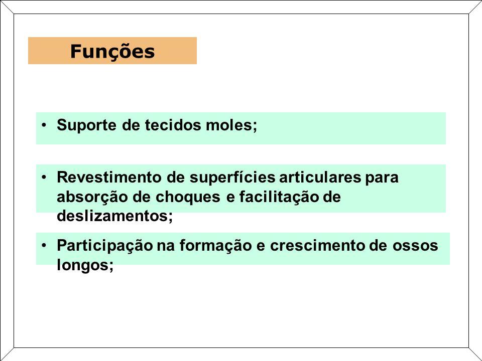 Suporte de tecidos moles; Funções Revestimento de superfícies articulares para absorção de choques e facilitação de deslizamentos; Participação na for