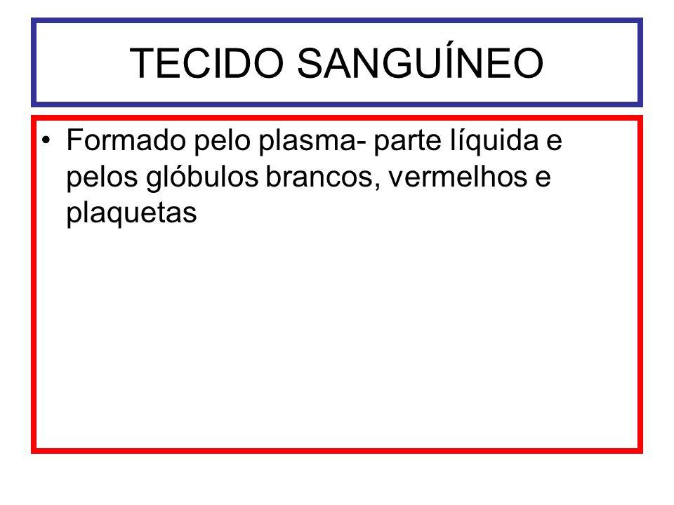 TECIDO SANGUÍNEO Formado pelo plasma- parte líquida e pelos glóbulos brancos, vermelhos e plaquetas