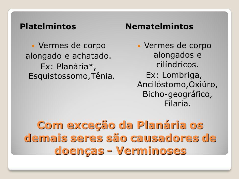 Com exceção da Planária os demais seres são causadores de doenças - Verminoses PlatelmintosNematelmintos Vermes de corpo alongado e achatado. Ex: Plan