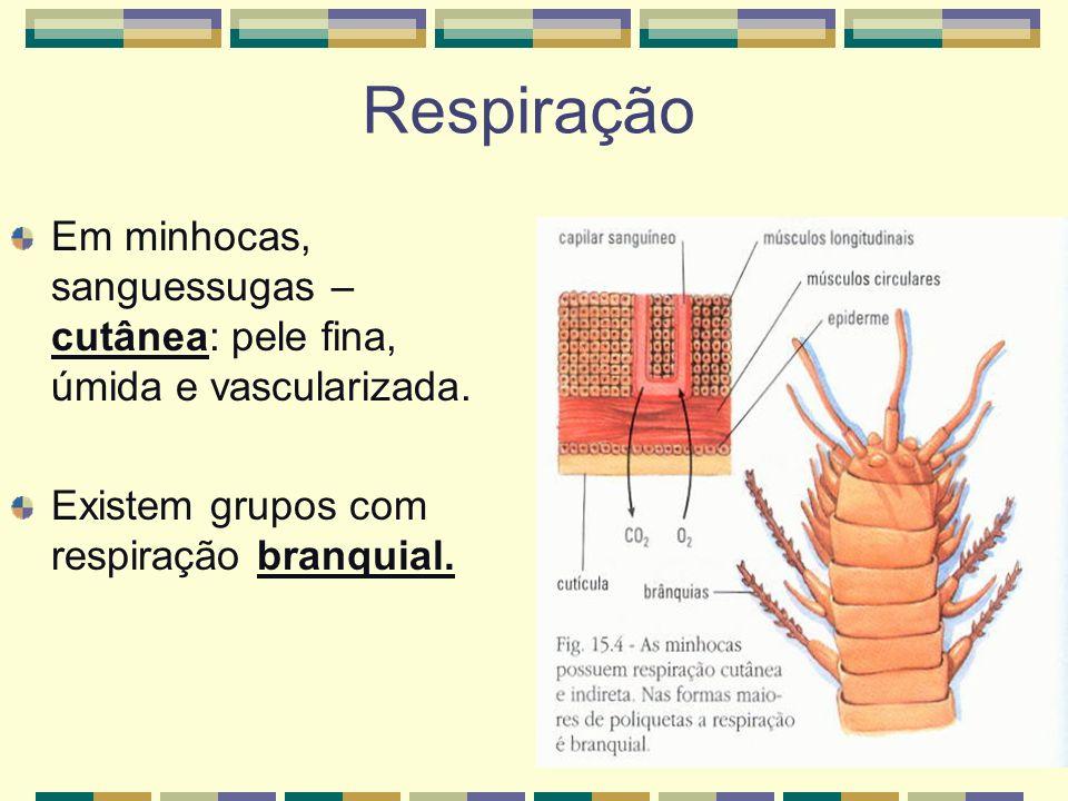 Respiração Em minhocas, sanguessugas – cutânea: pele fina, úmida e vascularizada.