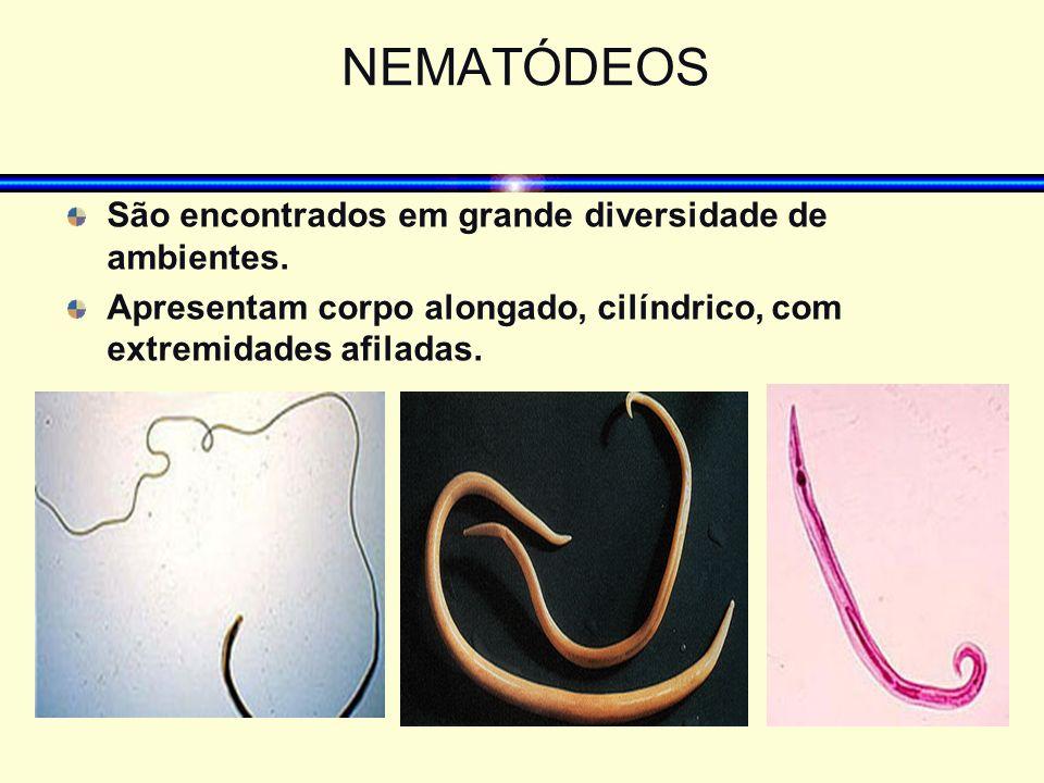 NEMATÓDEOS São encontrados em grande diversidade de ambientes. Apresentam corpo alongado, cilíndrico, com extremidades afiladas.