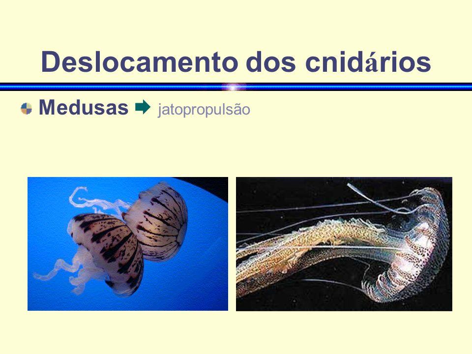 Deslocamento dos cnid á rios Medusas jatopropulsão