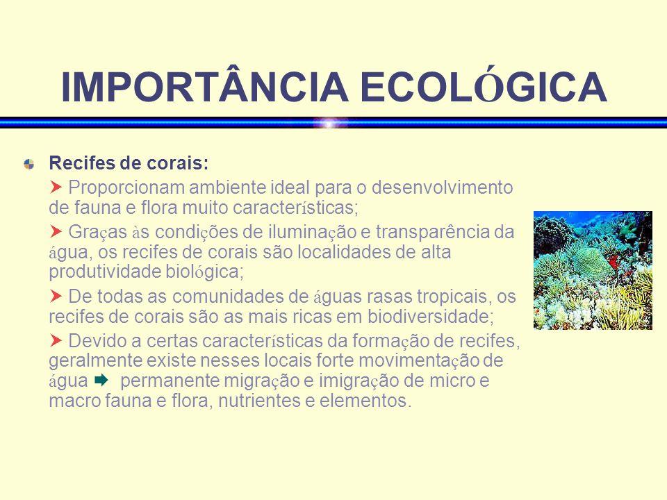 IMPORTÂNCIA ECOL Ó GICA Recifes de corais: Proporcionam ambiente ideal para o desenvolvimento de fauna e flora muito caracter í sticas; Gra ç as à s c