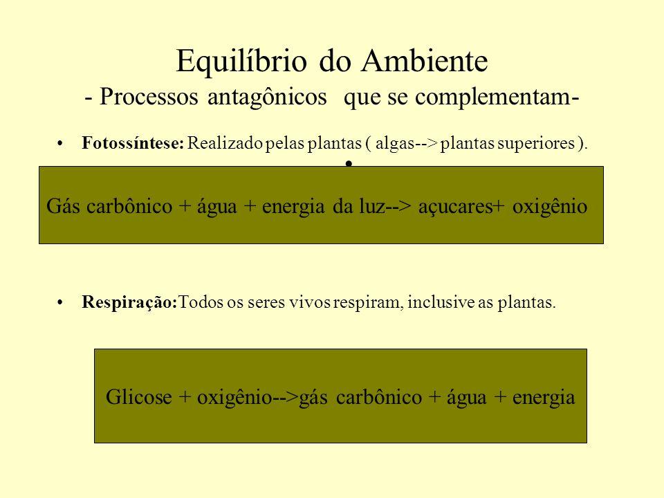 Equilíbrio do Ambiente - Processos antagônicos que se complementam- Fotossíntese: Realizado pelas plantas ( algas--> plantas superiores ). Respiração: