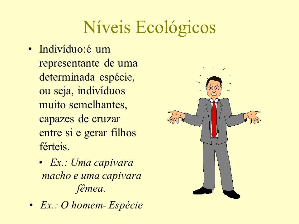 Níveis Ecológicos Indivíduo:é um representante de uma determinada espécie, ou seja, indivíduos muito semelhantes, capazes de cruzar entre si e gerar f
