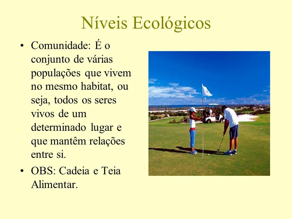 Níveis Ecológicos Comunidade: É o conjunto de várias populações que vivem no mesmo habitat, ou seja, todos os seres vivos de um determinado lugar e qu