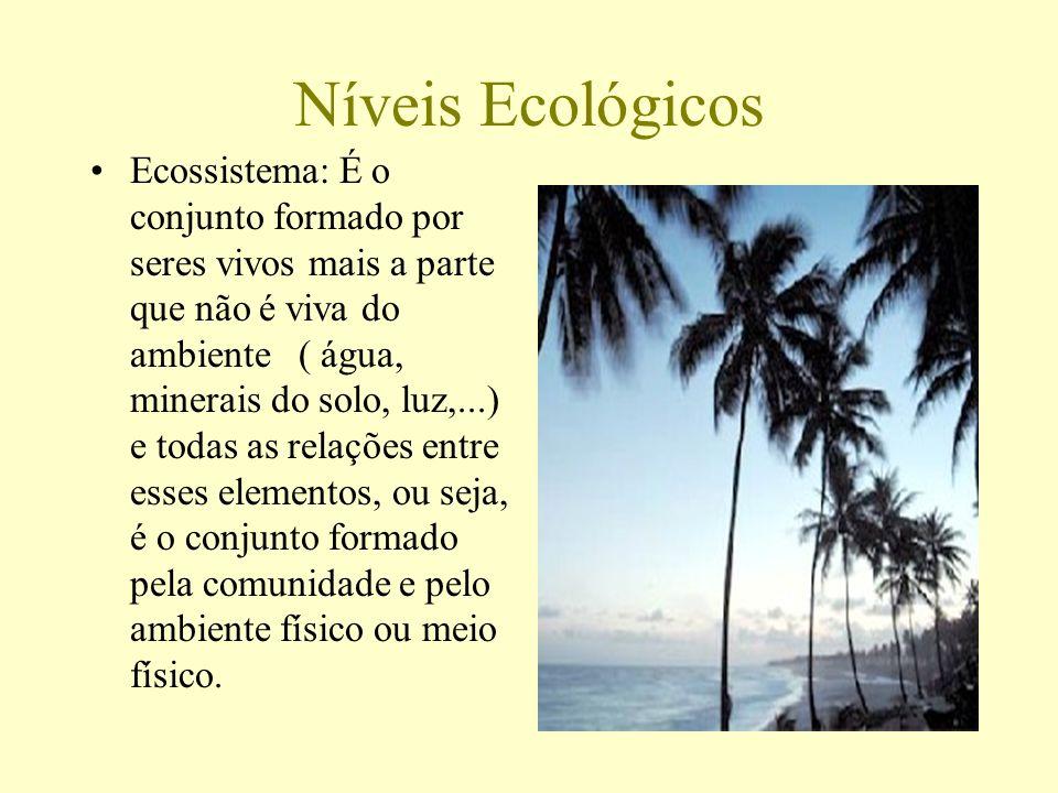 Níveis Ecológicos Ecossistema: É o conjunto formado por seres vivos mais a parte que não é viva do ambiente ( água, minerais do solo, luz,...) e todas