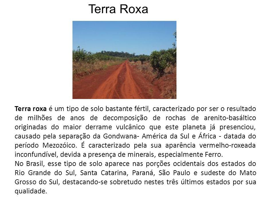 Terra roxa é um tipo de solo bastante fértil, caracterizado por ser o resultado de milhões de anos de decomposição de rochas de arenito-basáltico orig