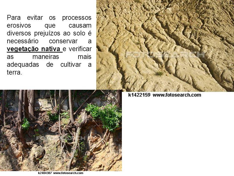 Para evitar os processos erosivos que causam diversos prejuízos ao solo é necessário conservar a vegetação nativa e verificar as maneiras mais adequad