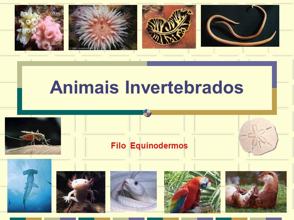 Animais Invertebrados Filo Equinodermos