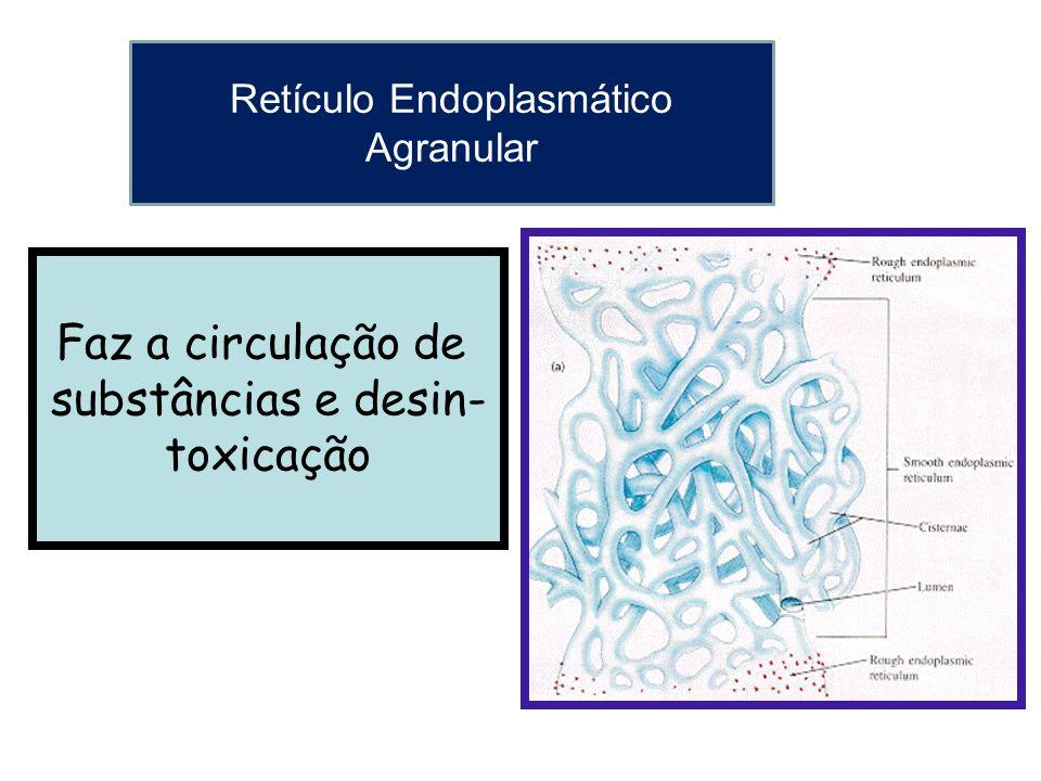 Faz a circulação de substâncias e desin- toxicação Retículo Endoplasmático Agranular