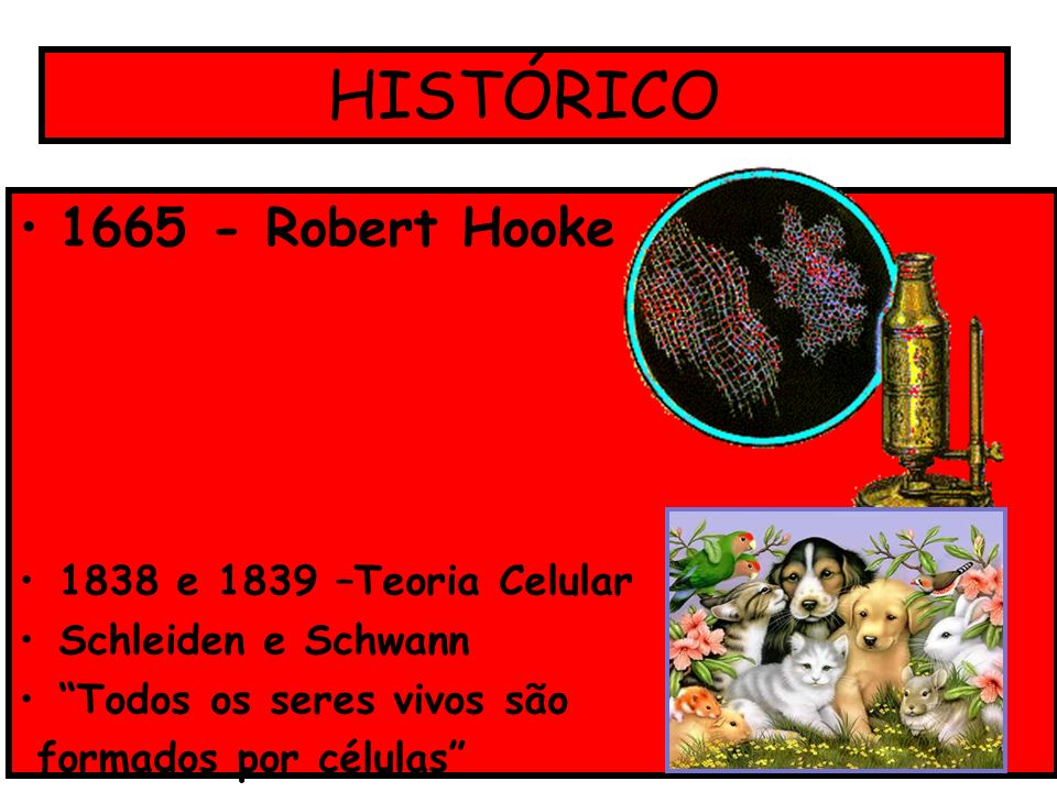 HISTÓRICO 1665 - Robert Hooke 1838 e 1839 –Teoria Celular Schleiden e Schwann Todos os seres vivos são formados por células
