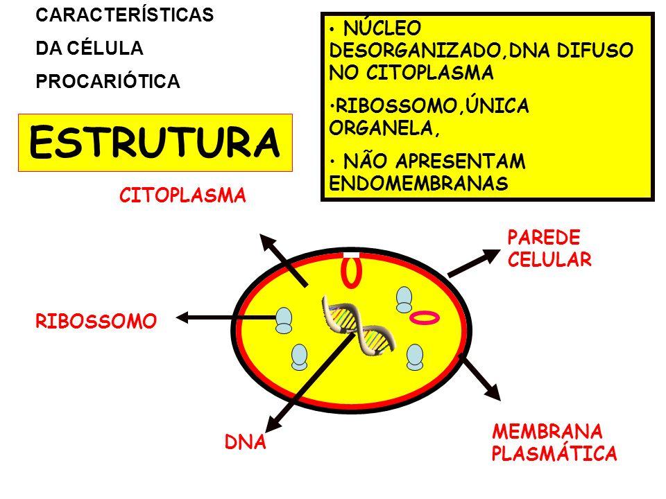 PAREDE CELULAR CITOPLASMA MEMBRANA PLASMÁTICA RIBOSSOMO DNA CARACTERÍSTICAS DA CÉLULA PROCARIÓTICA NÚCLEO DESORGANIZADO,DNA DIFUSO NO CITOPLASMA RIBOS