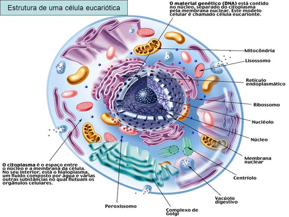 Estrutura de uma célula eucariótica