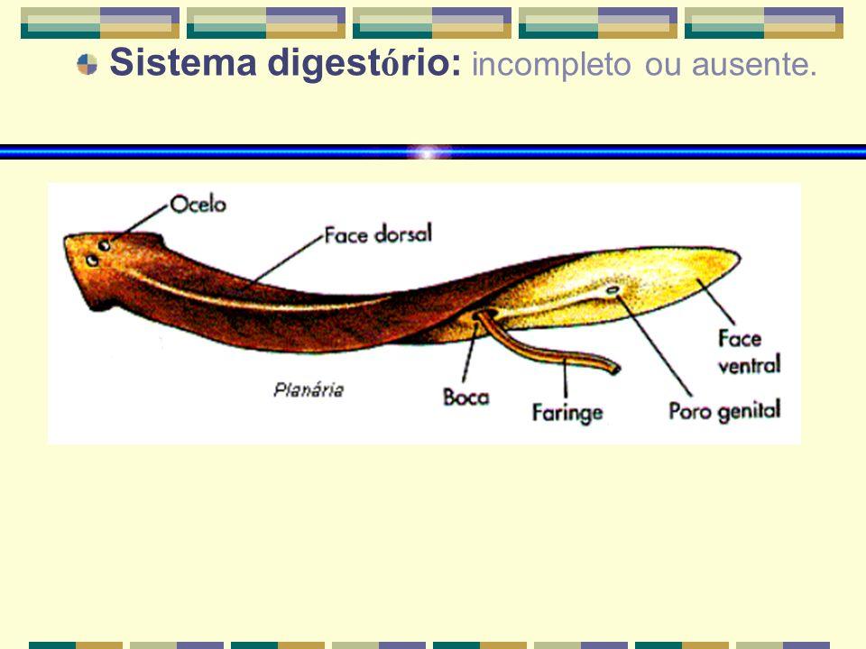 CLASSES DE PLATYHELMINTHES CLASSEEXEMPLOSCARACTER Í STICAS Turbellaria Plan á ria Representada por animais de habitat aqu á tico (maioria), principalmente marinho ou de ambientes terrestres muito ú midos.