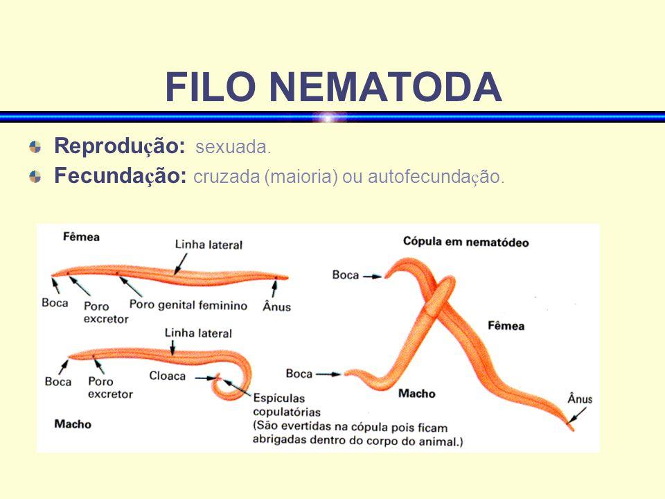 FILO NEMATODA Dimorfismo sexual