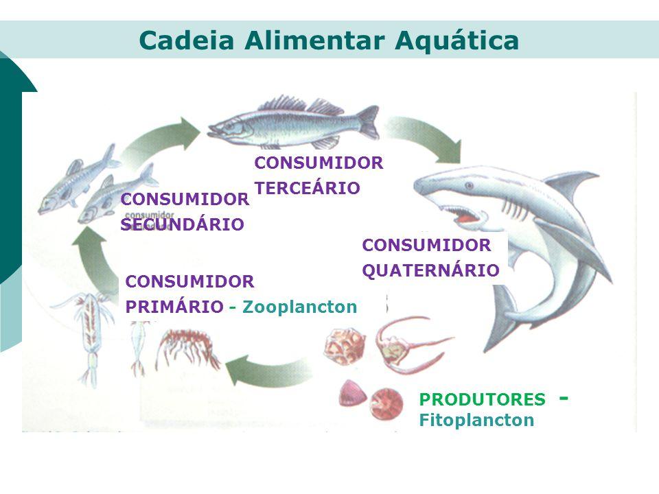 PRODUTORES - Fitoplancton CONSUMIDOR PRIMÁRIO - Zooplancton CONSUMIDOR SECUNDÁRIO CONSUMIDOR TERCEÁRIO CONSUMIDOR QUATERNÁRIO Cadeia Alimentar Aquátic