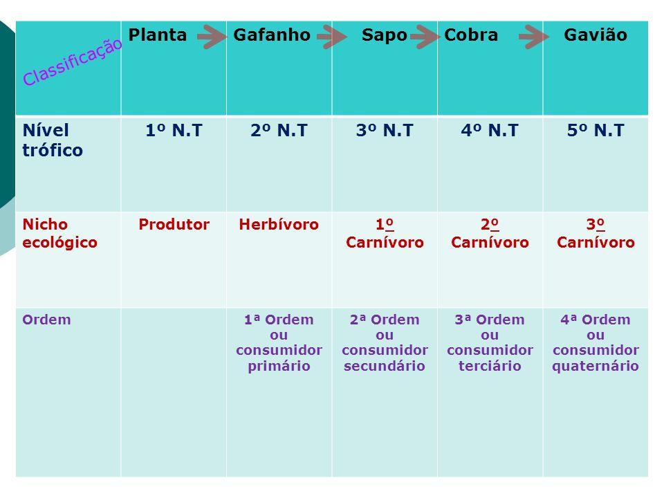 PlantaGafanhoSapoCobraGavião Nível trófico 1º N.T2º N.T3º N.T4º N.T5º N.T Nicho ecológico ProdutorHerbívoro1º Carnívoro 2º Carnívoro 3º Carnívoro Orde