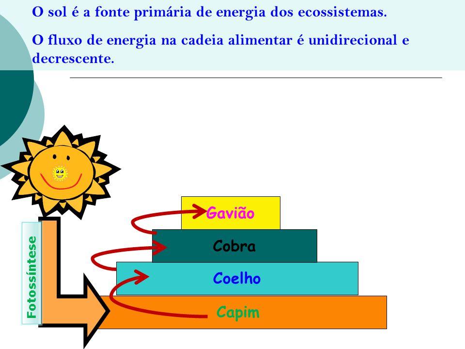 O sol é a fonte primária de energia dos ecossistemas. O fluxo de energia na cadeia alimentar é unidirecional e decrescente. Capim Coelho Cobra Gavião