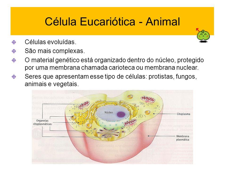 Célula Eucariótica - Animal Células evoluídas. São mais complexas. O material genético está organizado dentro do núcleo, protegido por uma membrana ch