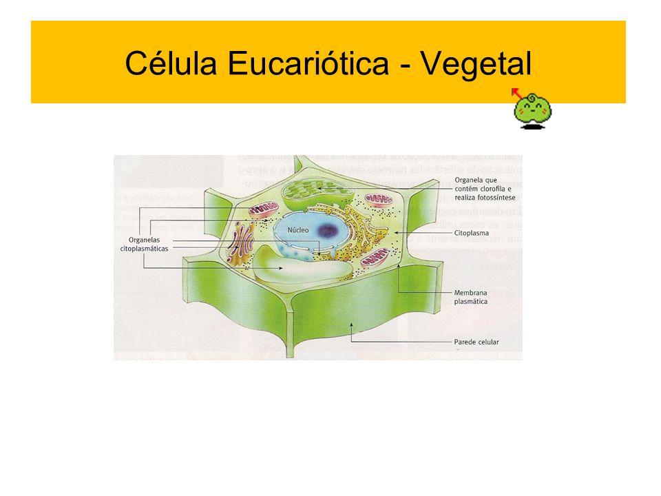 Célula Eucariótica - Vegetal