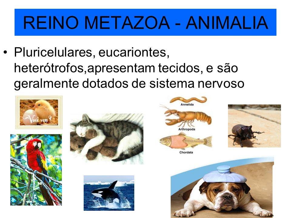 REINO METAZOA - ANIMALIA Pluricelulares, eucariontes, heterótrofos,apresentam tecidos, e são geralmente dotados de sistema nervoso