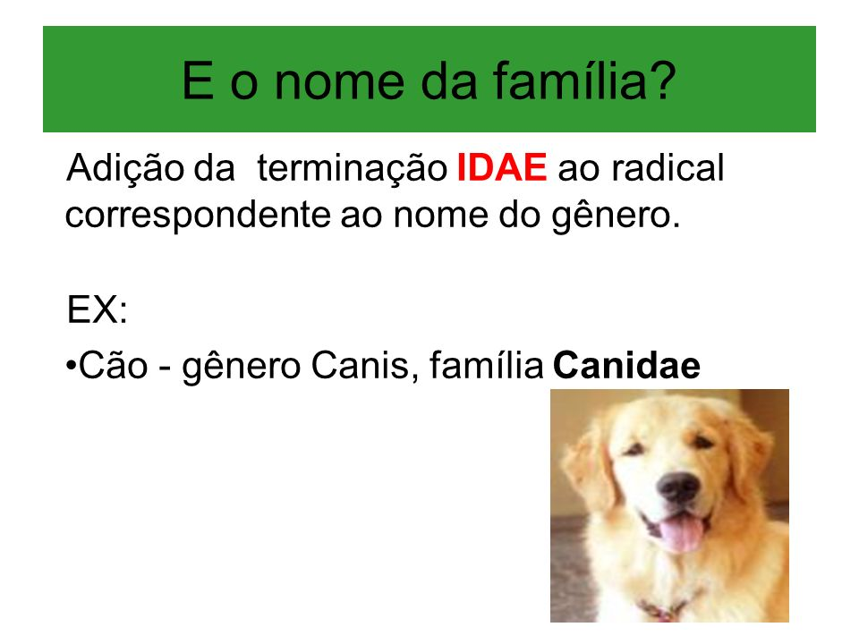 E o nome da família? Adição da terminação IDAE ao radical correspondente ao nome do gênero. EX: Cão - gênero Canis, família Canidae
