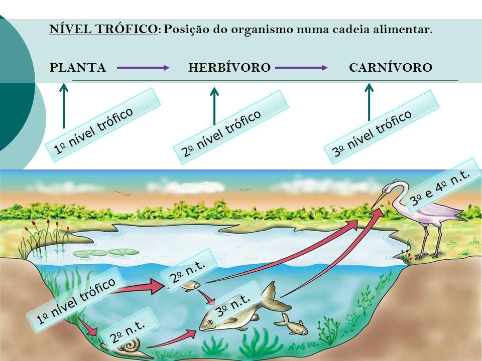 NÍVEL TRÓFICO: Posição do organismo numa cadeia alimentar. PLANTA HERBÍVORO CARNÍVORO 1 o nível trófico 2 o nível trófico 3 o nível trófico 1 o nível