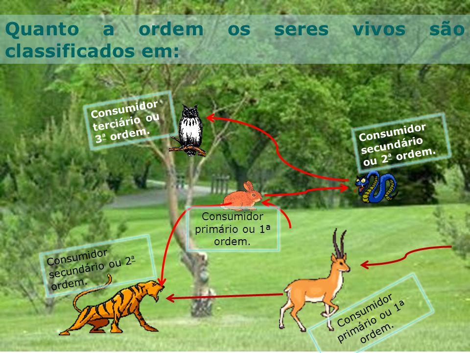 Consumidor primário ou 1ª ordem. Quanto a ordem os seres vivos são classificados em: Consumidor terciário ou 3 ª ordem. Consumidor secundário ou 2 ª o