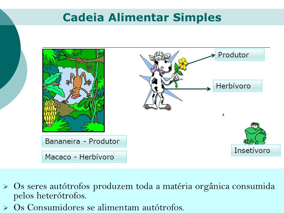 Bananeira - Produtor Macaco - Herbívoro Produtor Herbívoro Insetívoro Os seres autótrofos produzem toda a matéria orgânica consumida pelos heterótrofo