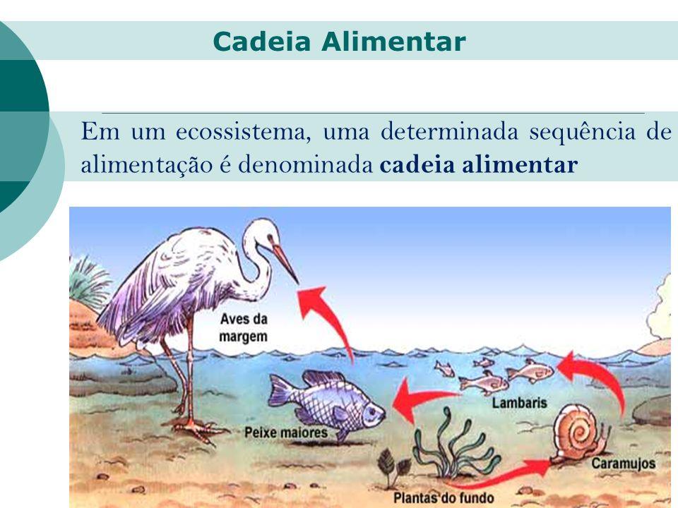 Em um ecossistema, uma determinada sequência de alimentação é denominada cadeia alimentar Cadeia Alimentar