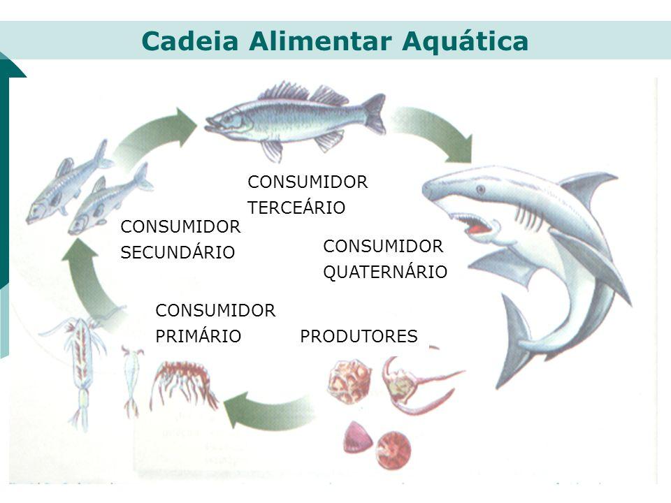 PRODUTORES CONSUMIDOR PRIMÁRIO CONSUMIDOR SECUNDÁRIO CONSUMIDOR TERCEÁRIO CONSUMIDOR QUATERNÁRIO Cadeia Alimentar Aquática