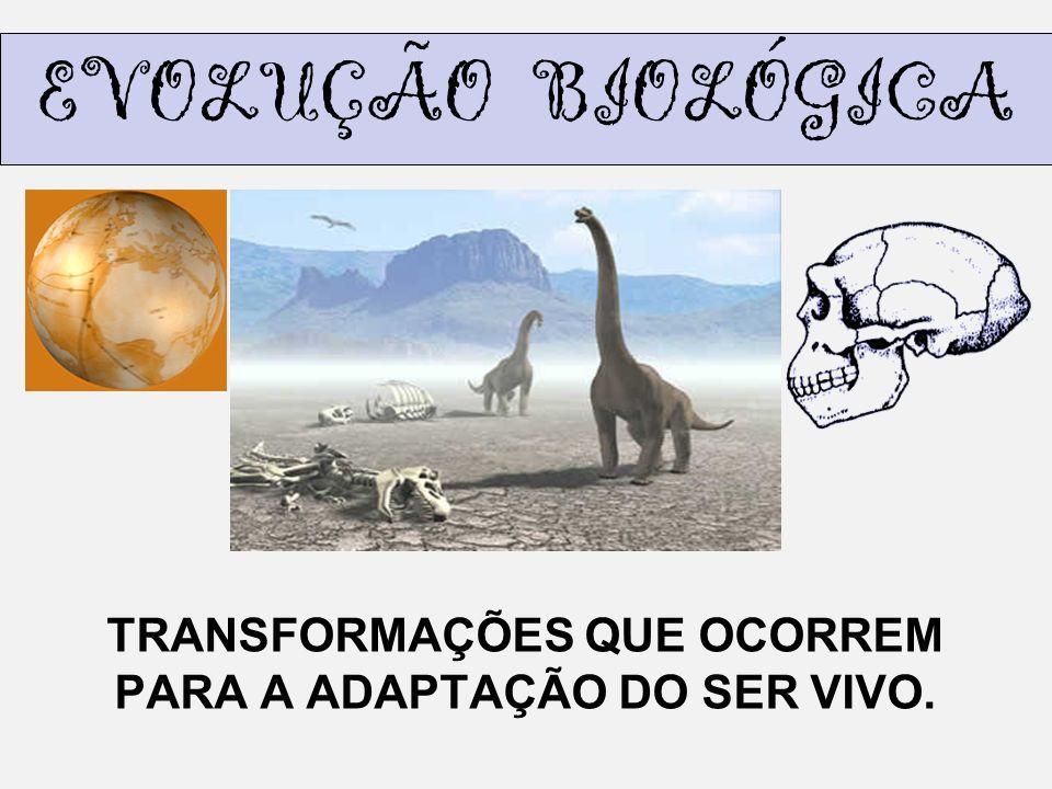EVOLUÇÃO BIOLÓGICA TRANSFORMAÇÕES QUE OCORREM PARA A ADAPTAÇÃO DO SER VIVO.